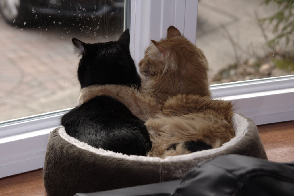 Img gatos domesticos felices