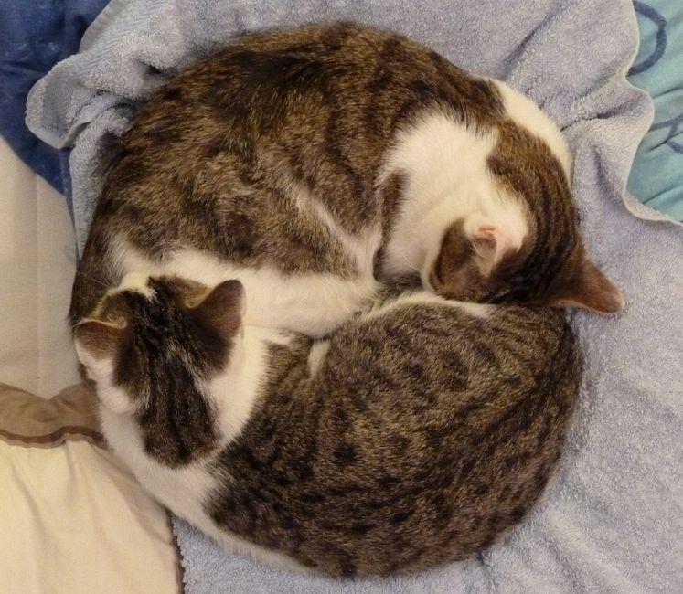 Img gatos dos uno 2 art