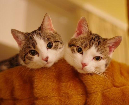 Img gatos dos uno art