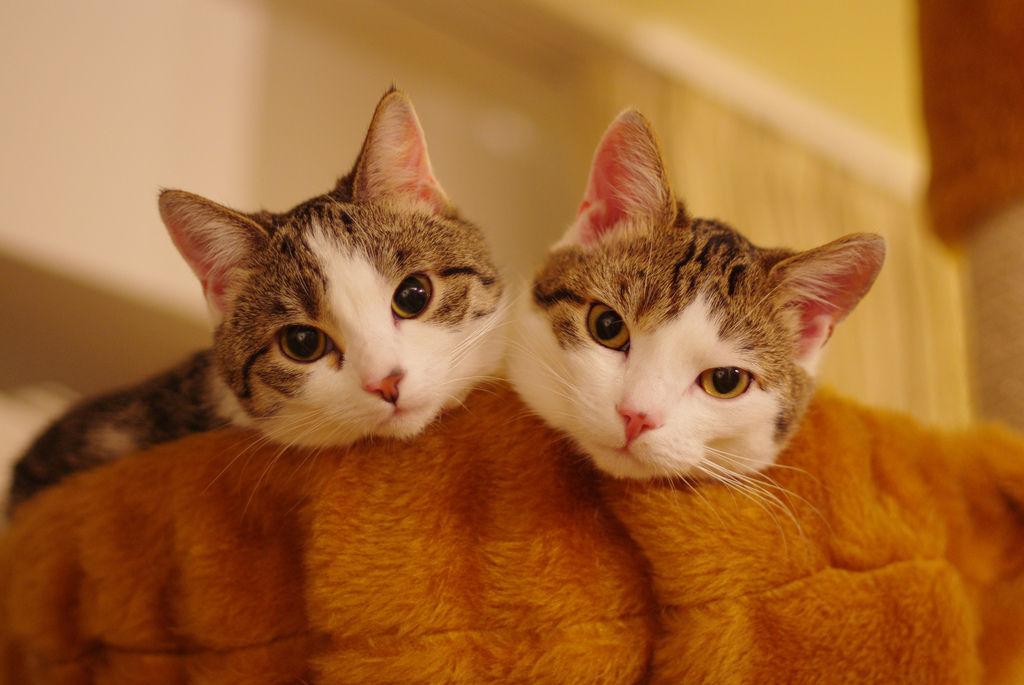 Img gatos dos uno