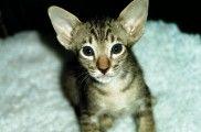 Img gatos educar educacion animales comportamiento mascotas felinos listado