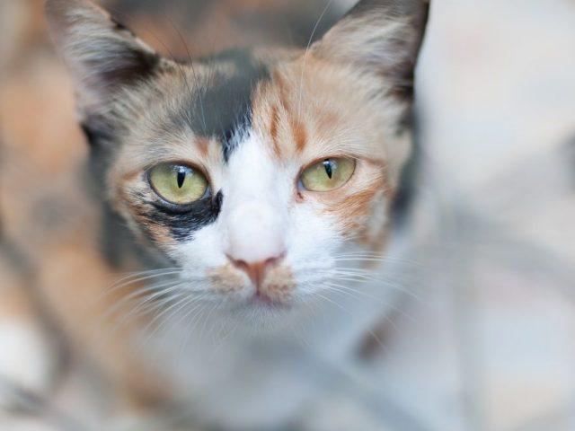 Encontrar A Un Gato Perdido En 7 Pasos Consumer