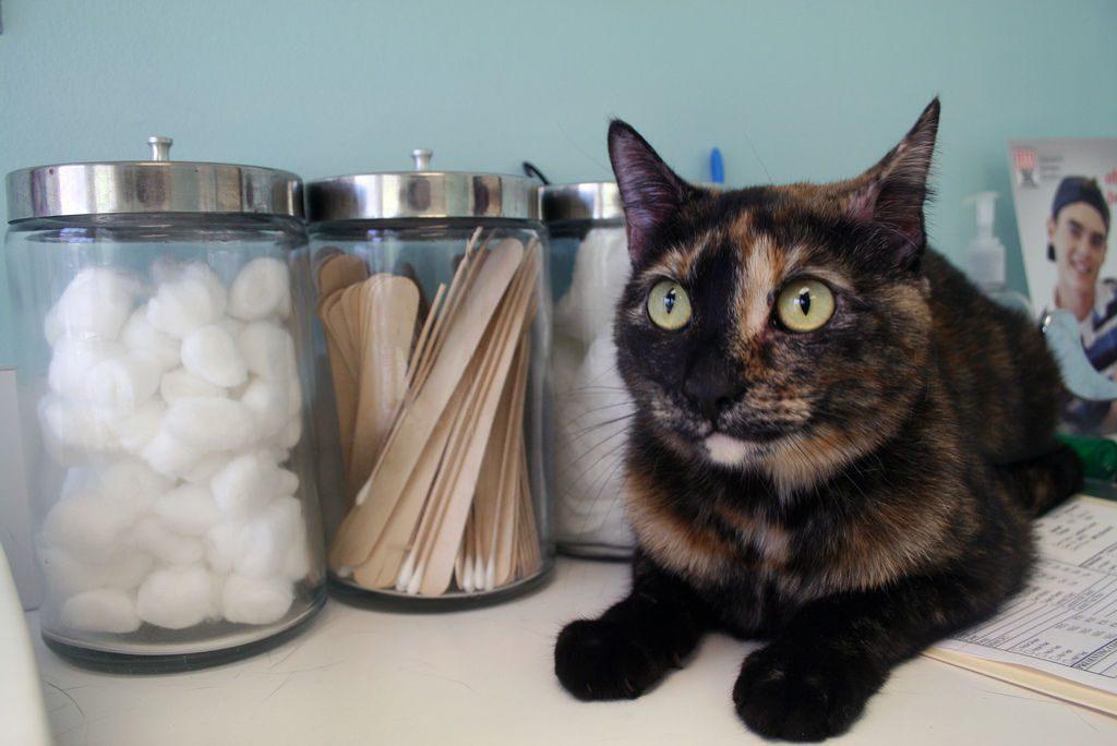 La gato de en oreja manchas