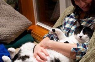 Img gatos esterilizados machos esterilizar mascotas animales ventajas cuidados peligros art
