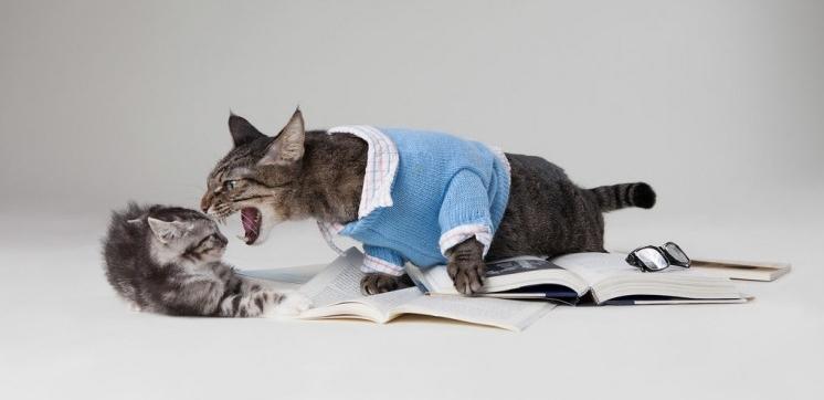 Img gatos estresados cara