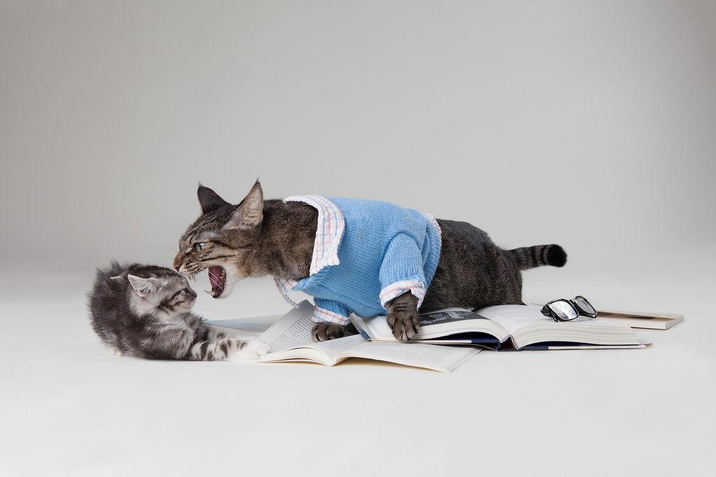 Img gatos estresados