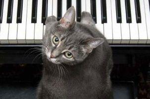 Img gatos famosos youtube videos facebook animales mascotas nora piano cats art