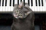 img_gatos famosos youtube videos facebook animales mascotas nora piano cats listado
