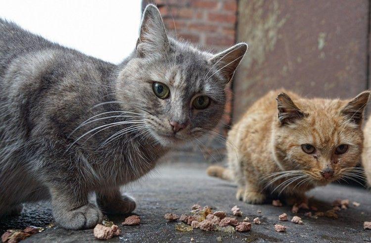 Img gatos ferales alimentar art