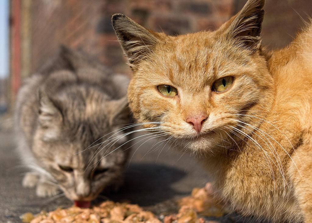 Img gatos ferales