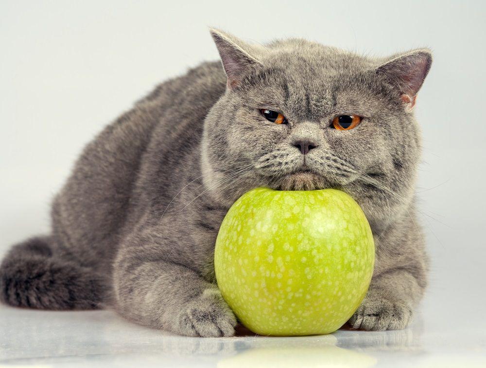 Img gatos frutas peligrosas
