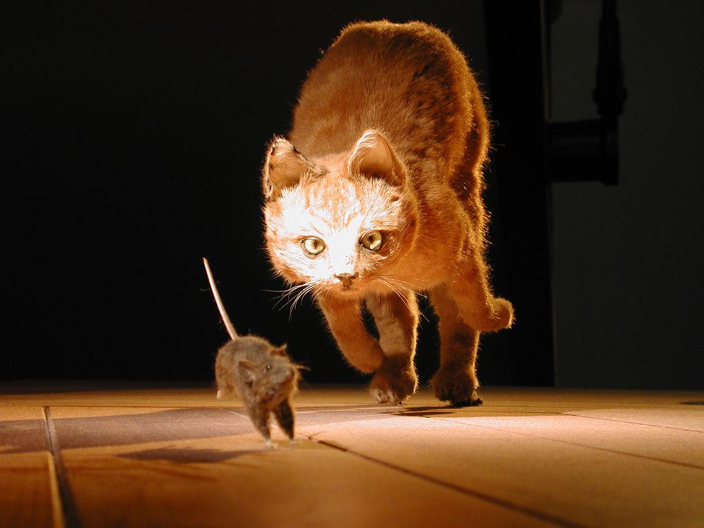Como El Ratón Y El Gato Un Miedo Muy Real Consumer