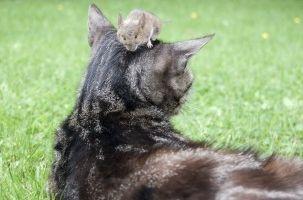 Img gatos gatones miedo enemigos ciencia huyen proteinascuriosidades animales mascotas art