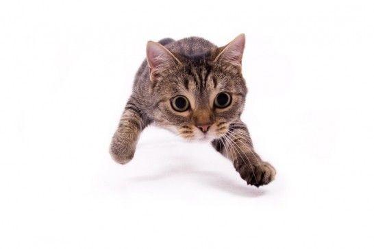 Img gatos juegos cazar listg