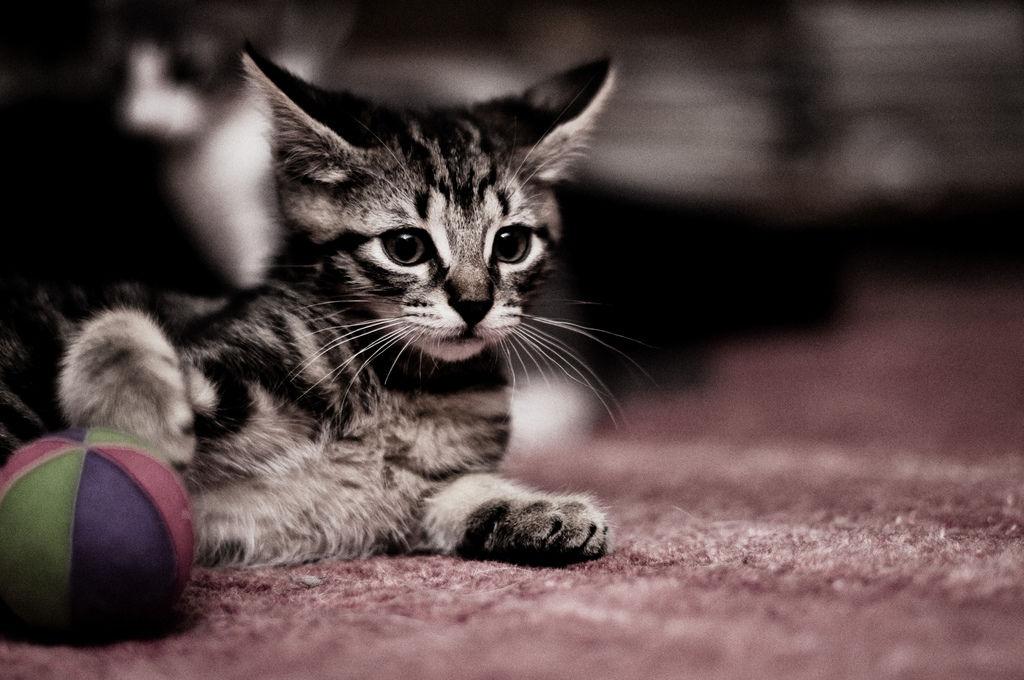 img_gatos juegos unicos 2