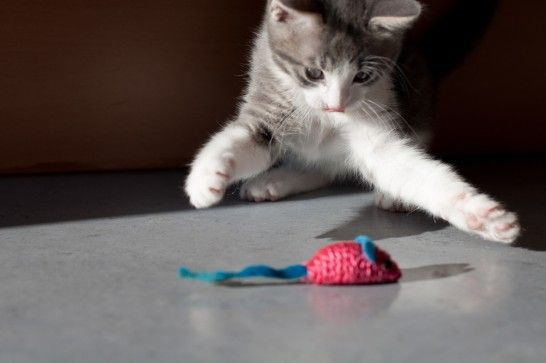 Img gatos juegos unicos listg