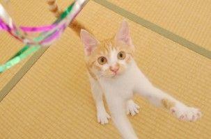 Img gatos jugar importancia beneficios juguetes animales mascotas art