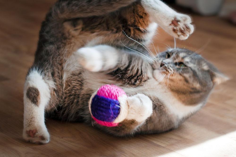 img_gatos jugar pelota