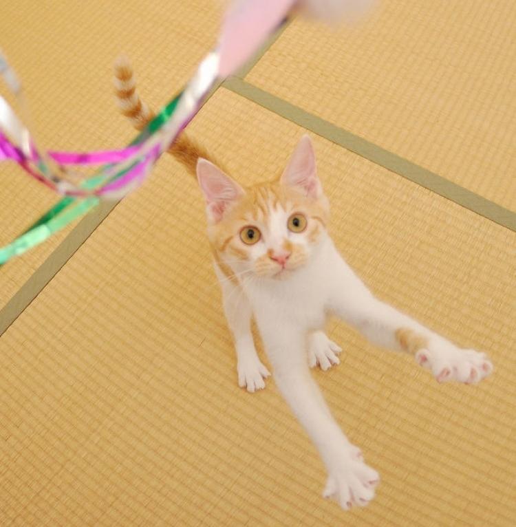 Img gatos jugar tiempo beneficiosa art