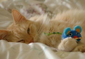 Img gatos juguetes caseros art
