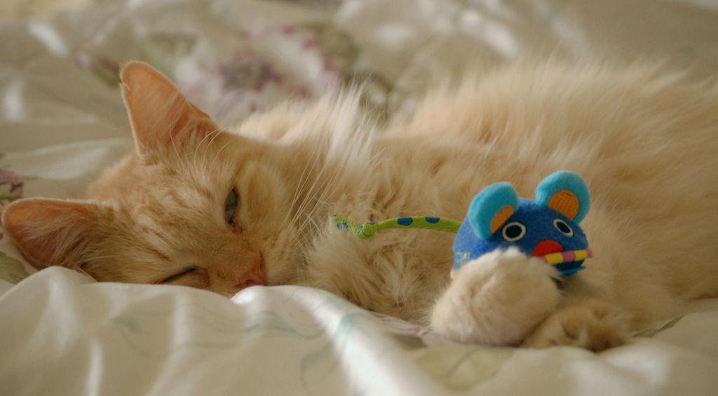 Img gatos juguetes caseros
