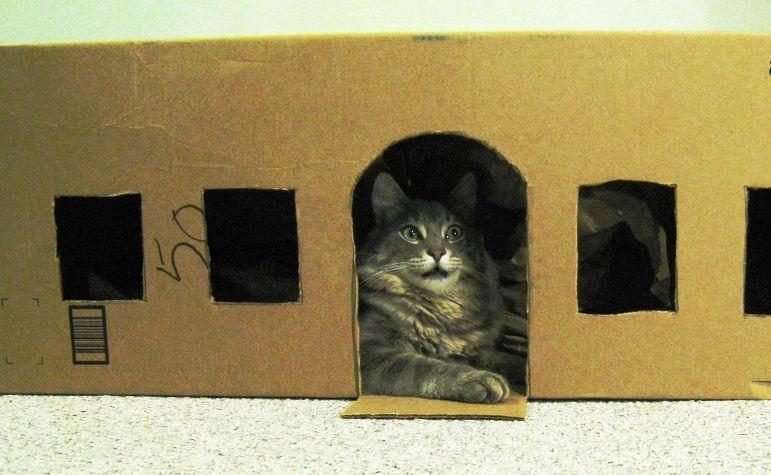 img_gatos juguetes inteligentes