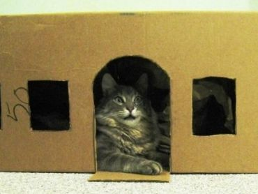 Img gatos juguetes inteligentess art