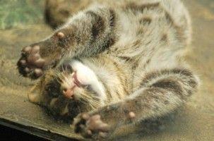 Img gatos lenguajes corporal comunicacion idioma entender felinos jugar art