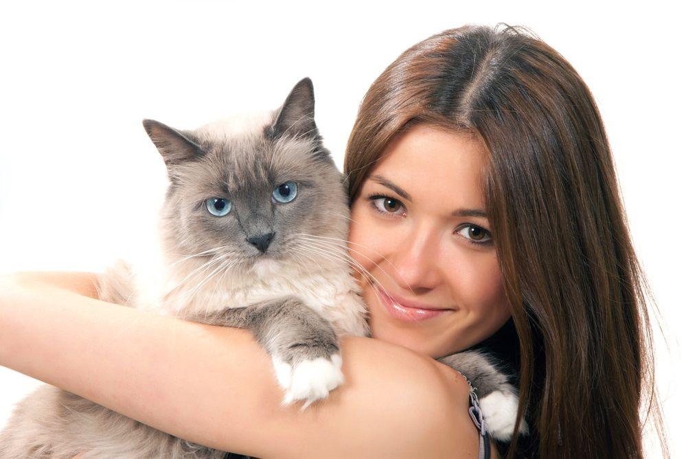 img_gatos mejores amigos