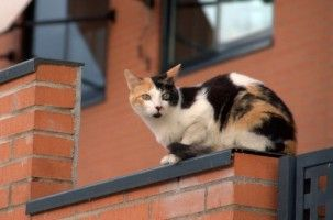 Img gatos microchips normas obligatorios perros perder gatos perdidos consejos calles tricolores art