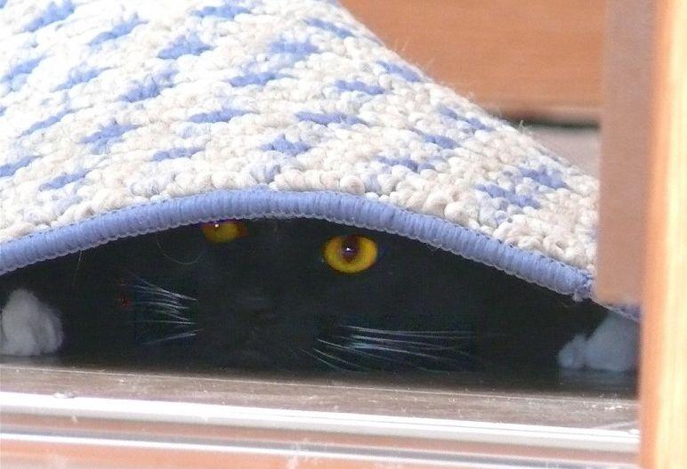 Img gatos miedos petardos art