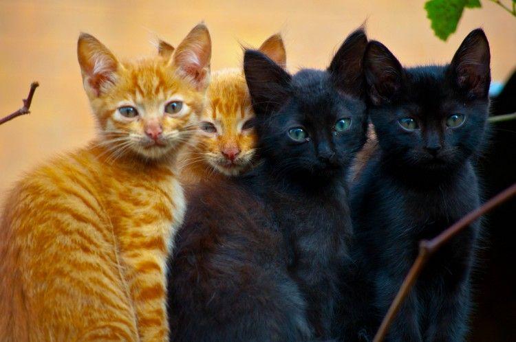Img gatos naranjas negros machos art