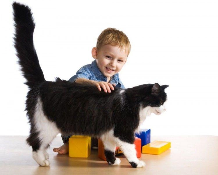 Img gatos ninos beneficios art