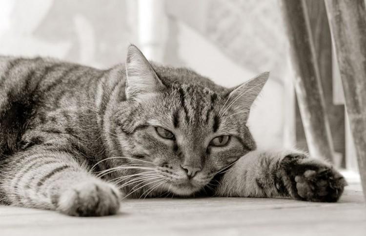 Img gatos no comen veterinario