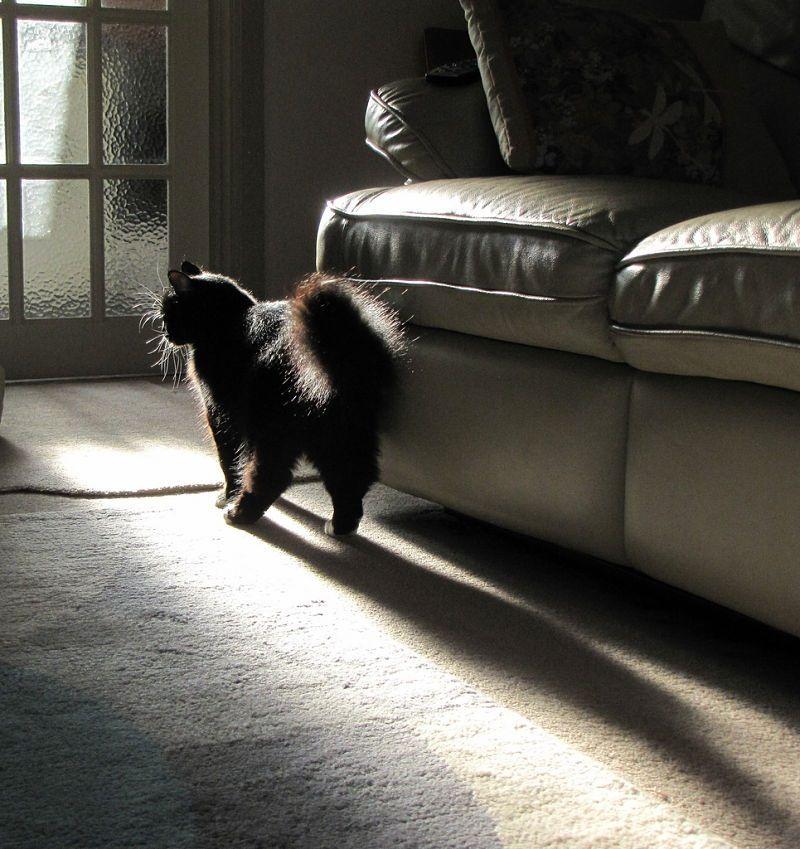 Img gatos no usa arenero problemas conducta animales mascotas veterinarios felinos web