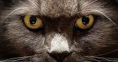 Img gatos ojos ven