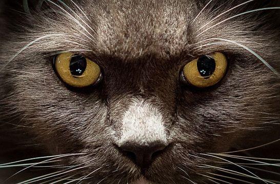 Img gatos ojos ven listg