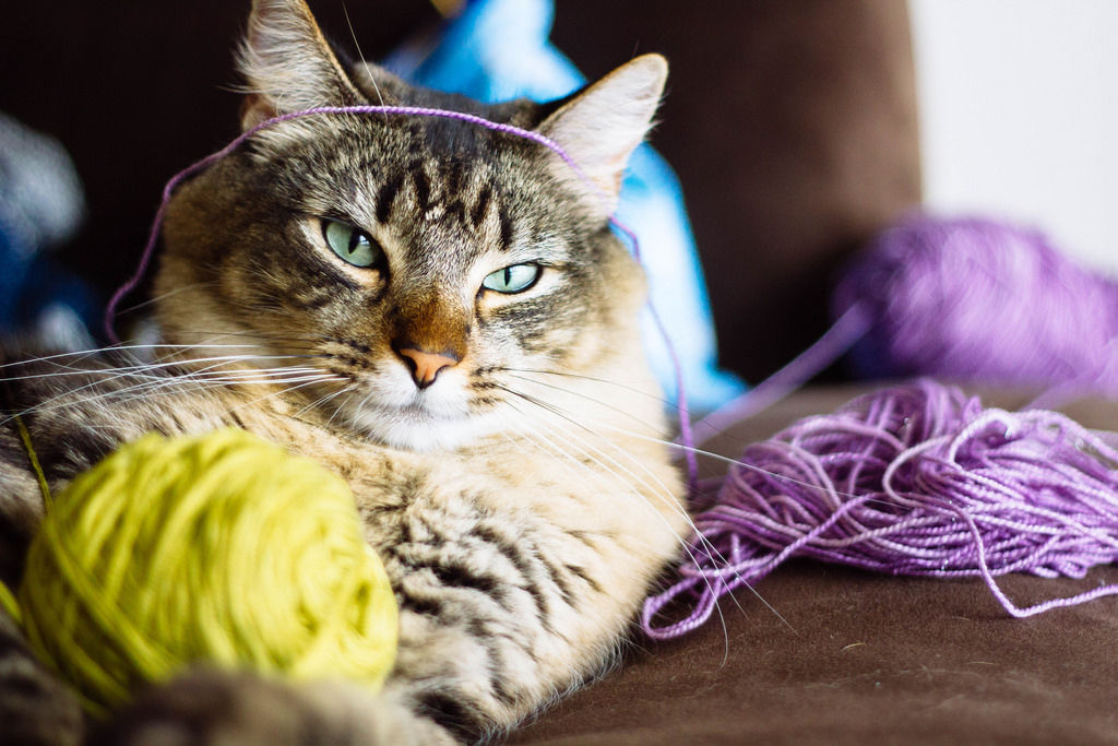 Img gatos ovillos lana peligros
