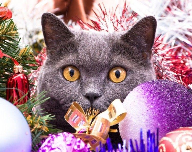 Img gatos peligros alimentos navidad art