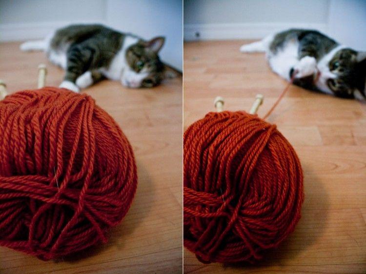 Img gatos peligros casa lanas art