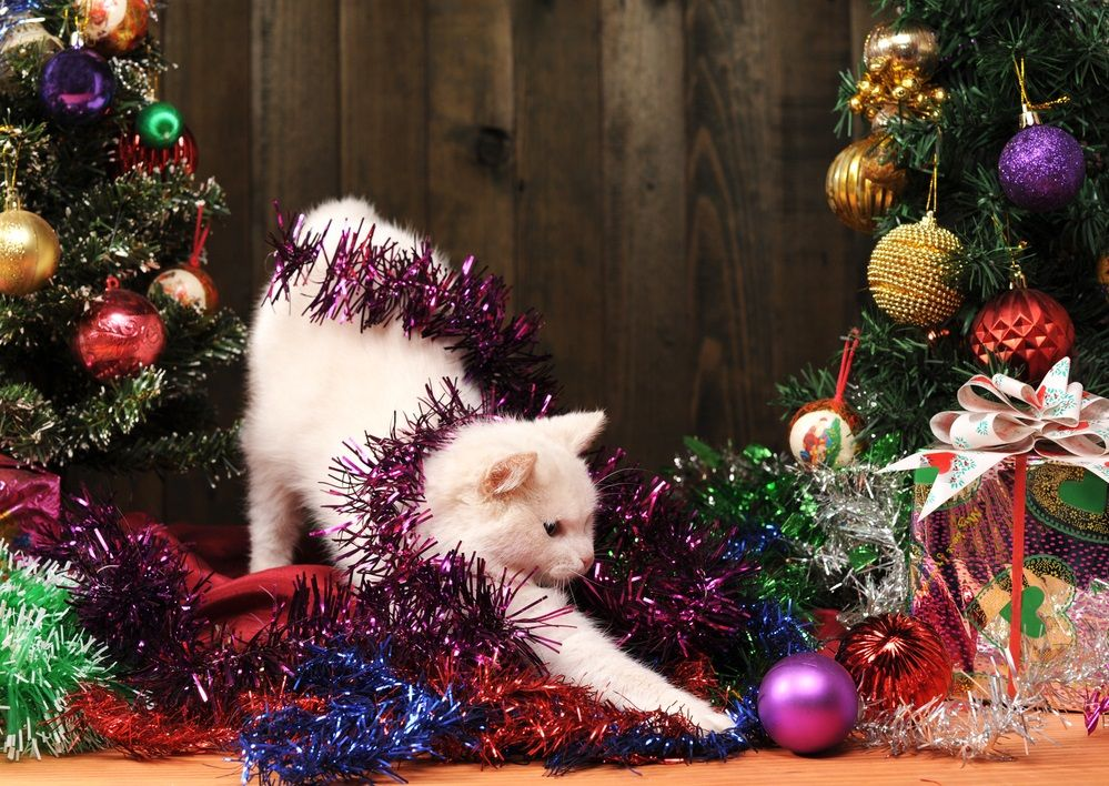 Img gatos peligros navidad cuidados