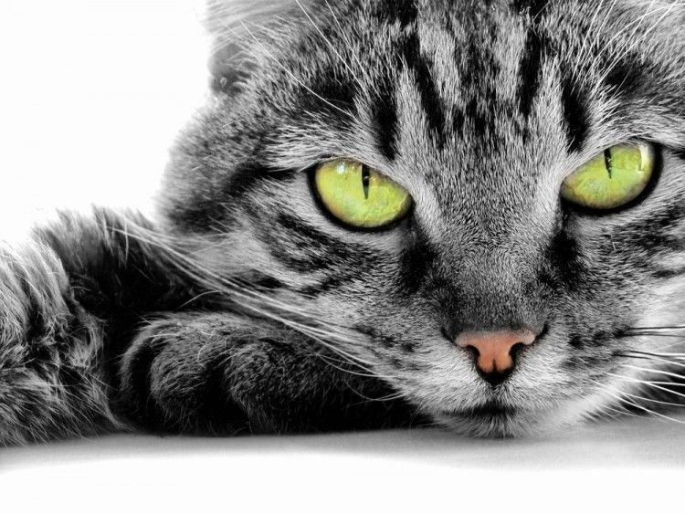 Img gatos pelo cuidados trucos 2 art