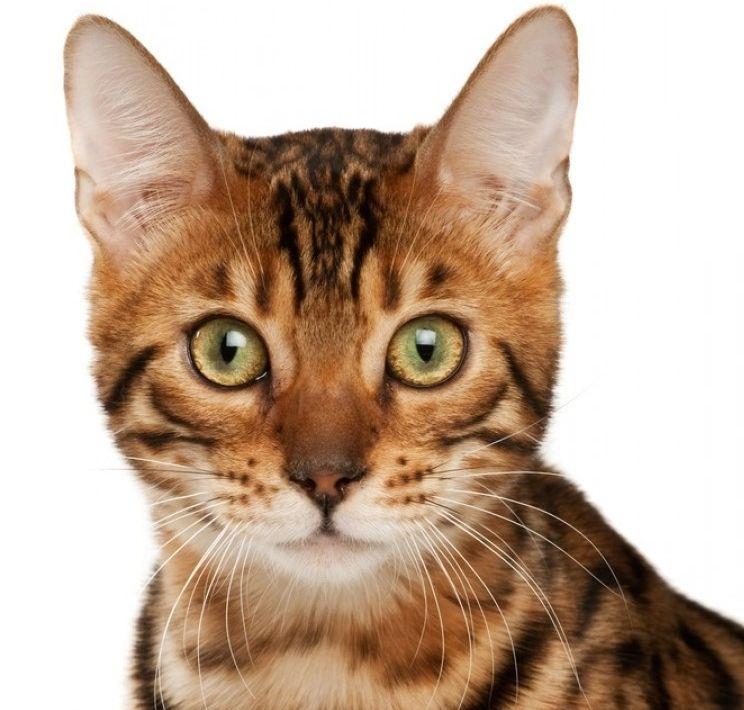 Img gatos pelo cuidados trucos articulos