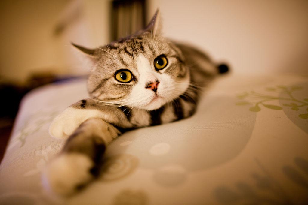 img_gatos pelos brillante