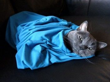 Img gatos pelos ropas art