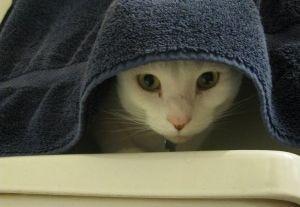 Img gatos perros bano aseo oidos agua limpiar orejas animales mascotas art