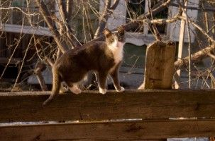 Img gatos perros como andan patas movimiento curiosidades ciencia animales mascotas art