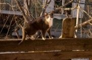 img_gatos perros como andan patas movimiento curiosidades ciencia animales mascotas listado