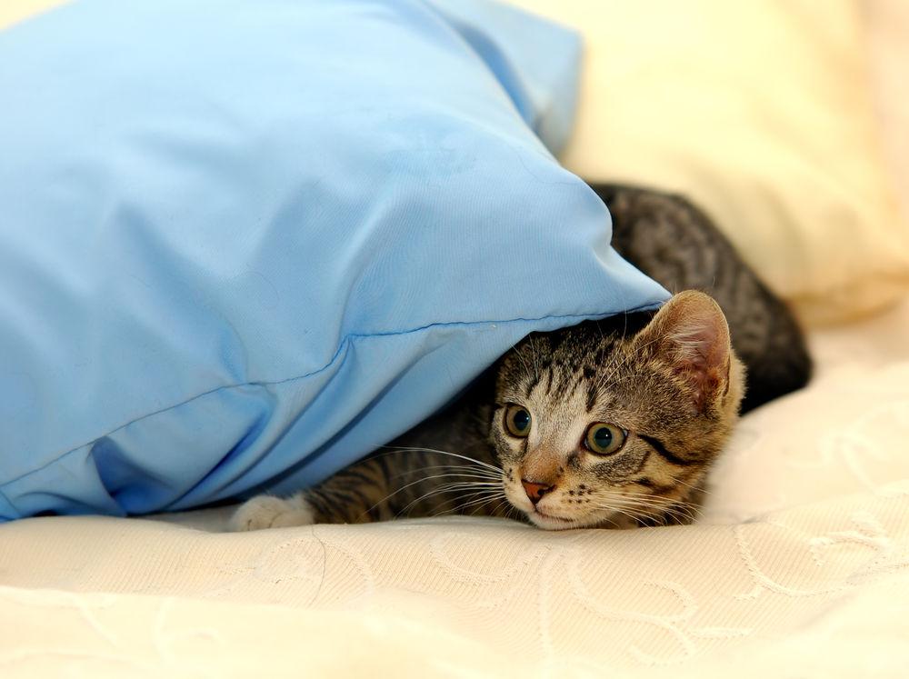 Img gatos petardos fuegos miedo