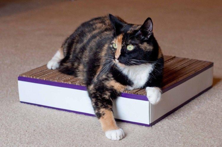 Img gatos rascador carton hacer art